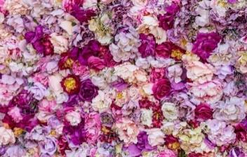 flores de lilas