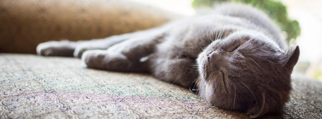 Trucos para eliminar el pelo de mascota del sofá