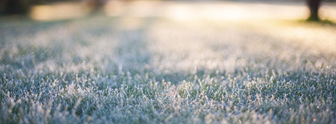 Cuidar césped en invierno