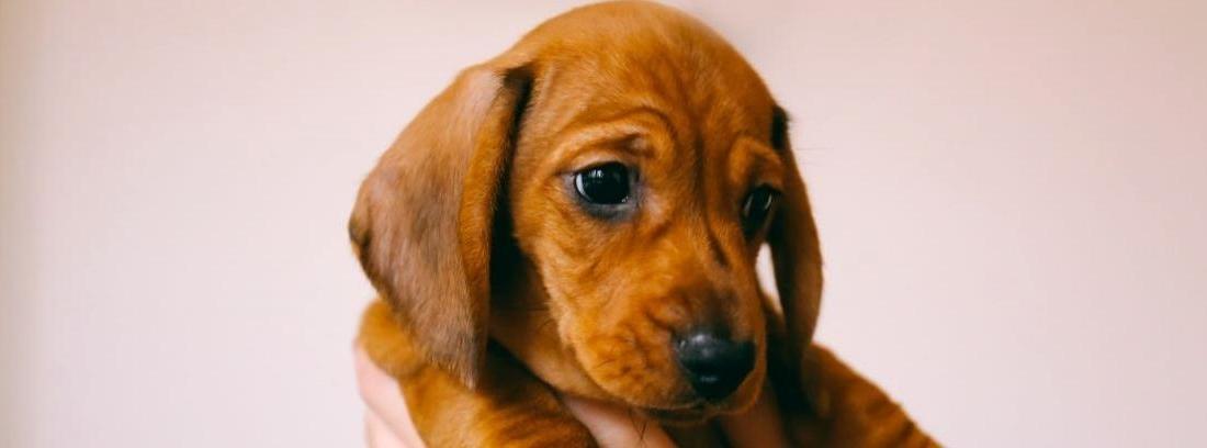 Una niña mira a un cachorro de perro