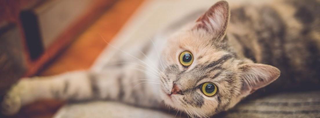 Salud de los gatos