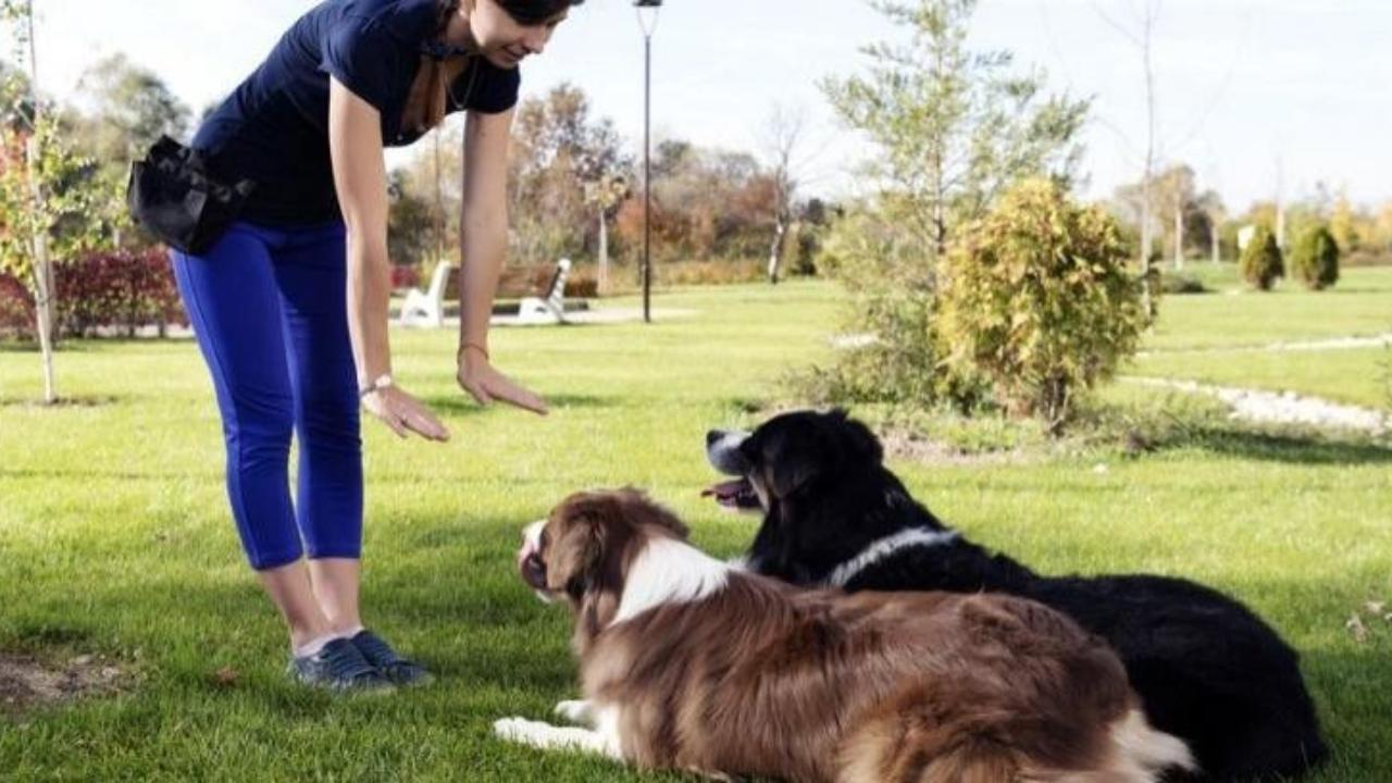 Ventajas del adiestramiento canino - canalHOGAR