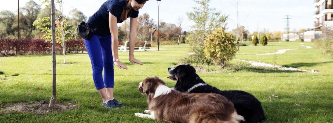 Perro saltando valla junto a hombre
