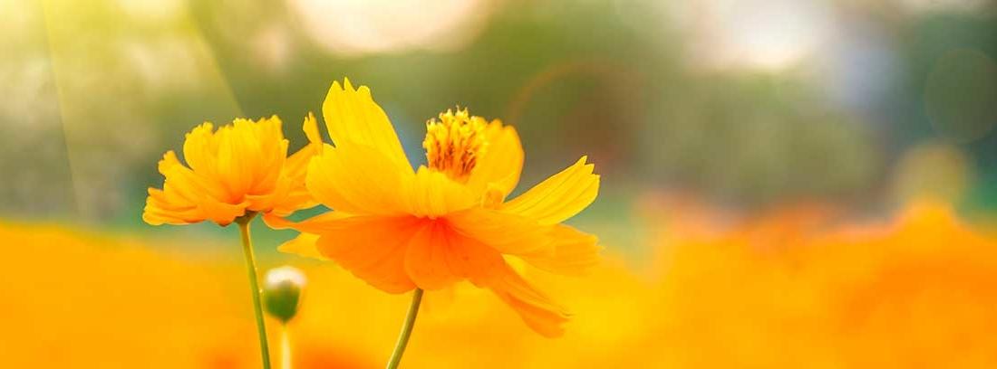 flores de color naranja bajo la luz del sol