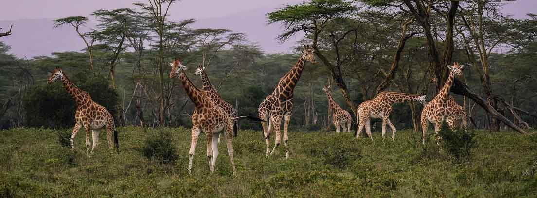 ¿Qué animales en peligro de extinción conoces?