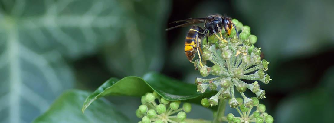 Avispa velutina posada sobre una planta de hojas verdes.