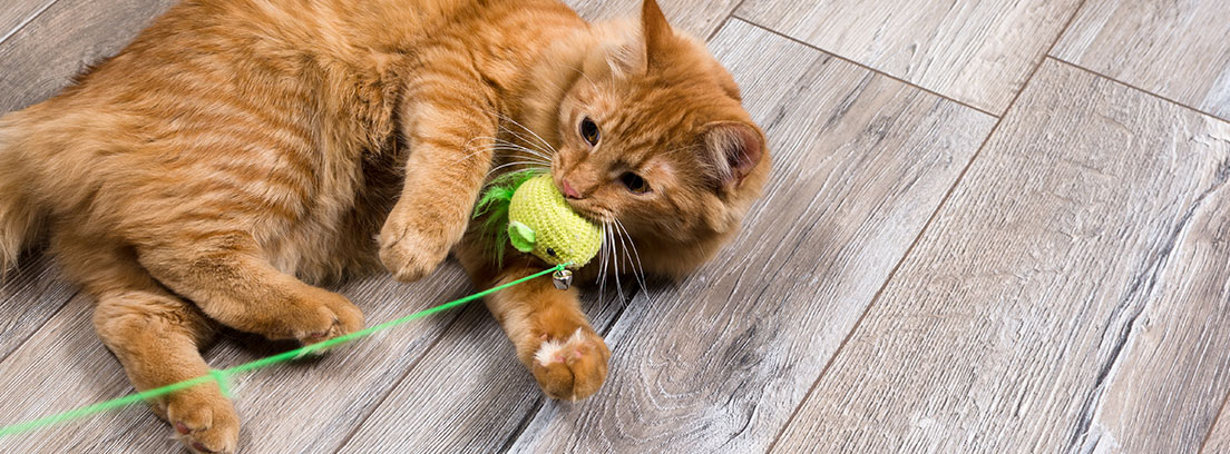 Un gato marrón juega con un juguete de ganchillo verde sobre un suelo gris de madera