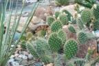 Jardín realizado con piedras y cactus
