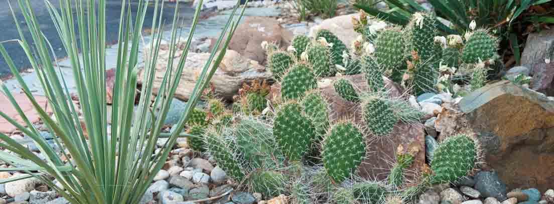 Diseño de jardines con piedras decorativas y cactus