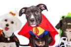 cachorros disfrazados para este Halloween