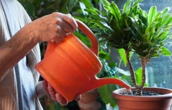 Anciana regando una planta con una regadera naranja
