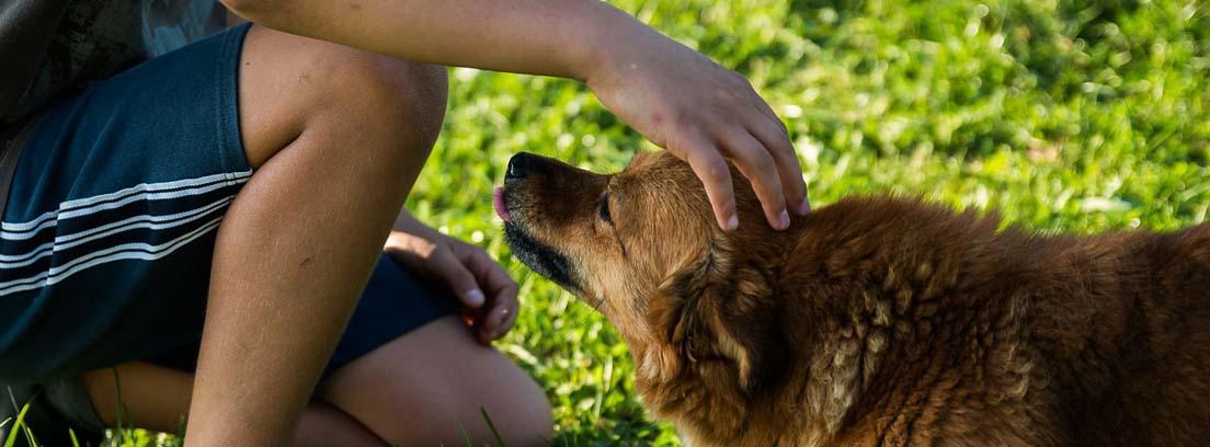 Persona acariciando perro