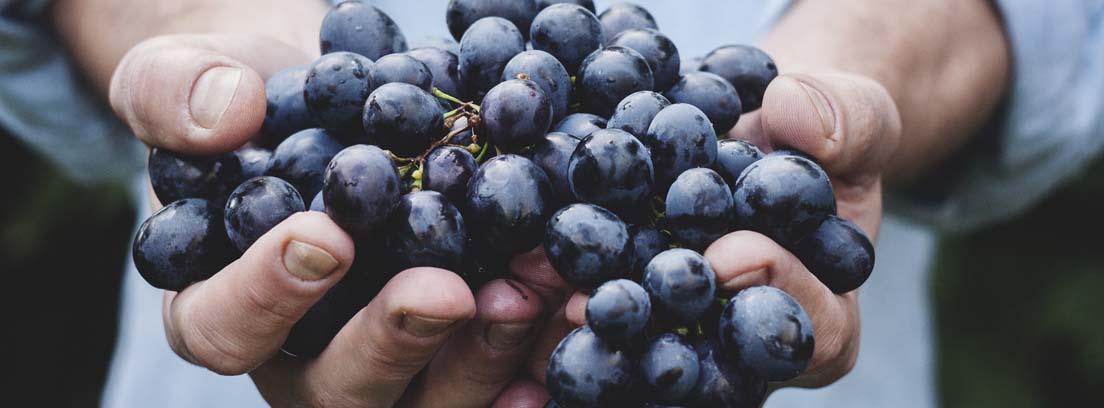 Manos con un racimo de uvas