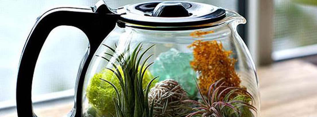 Jarra de café con eternal terrarium en su interior