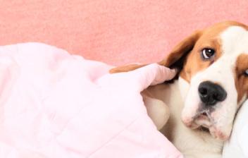 Un perro tumbado y arropado