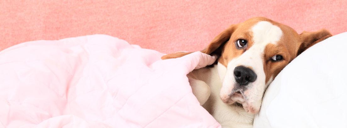 ¿Cómo dar medicina líquida a un perro cuando no quiere?