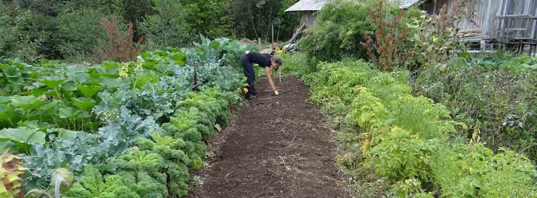 ¿Sabes cómo eliminar las malas hierbas para siempre?