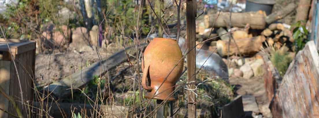 jardín y huertos descuidados