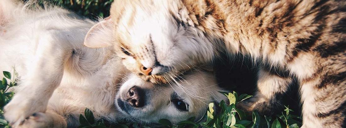 perro y gato jugando juntos