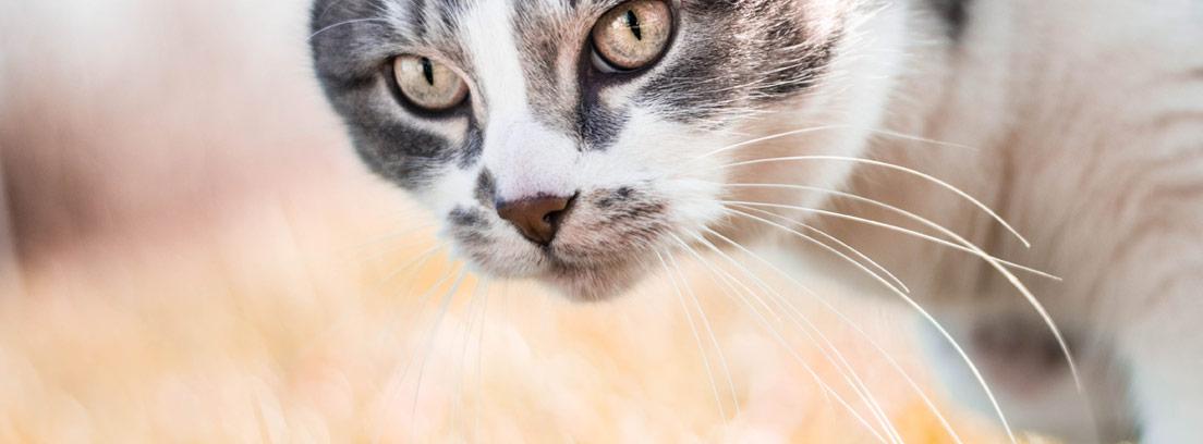 Primer plano de un gato