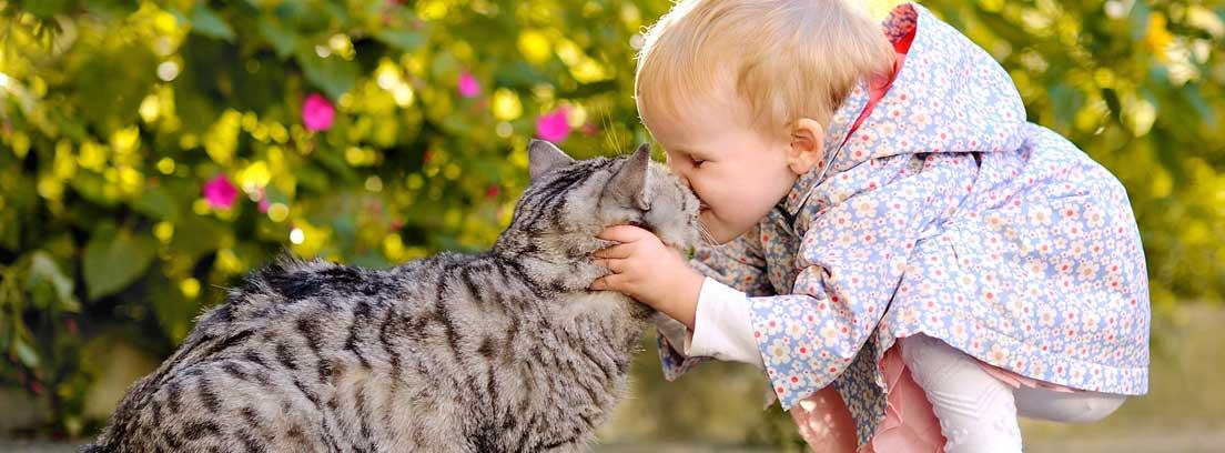 ¿Qué infecciones te puede contagiar tu mascota?