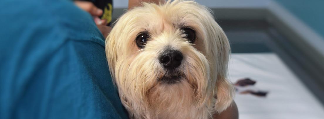 Veterinario administrando a un perro un antiparásitos para mascotas