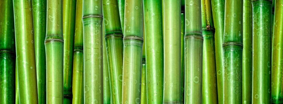 varias cañas de bambú verdes
