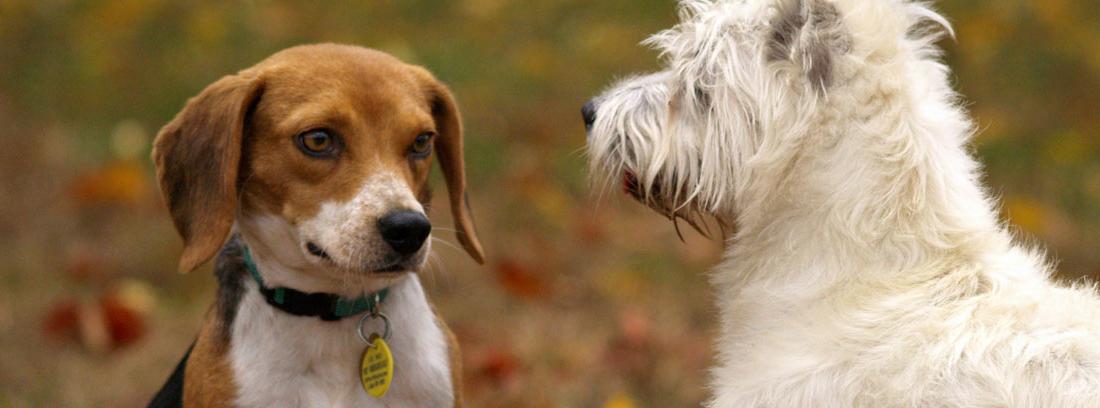 Un perro junto a otros en zona de parque