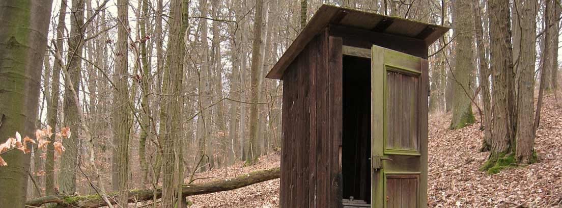 Caseta de madera con inodoro seco entre árboles y sobre hojas secas.