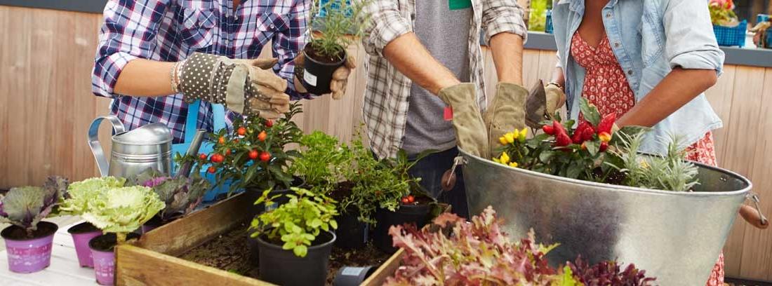 Tres personas poniendo plantas en maceteros grandes de casa