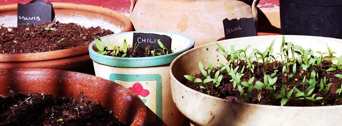 Diferentes macetas con plantas y carteles que indican su nombre.