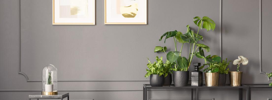 Plantas de interior colocadas en una mesa