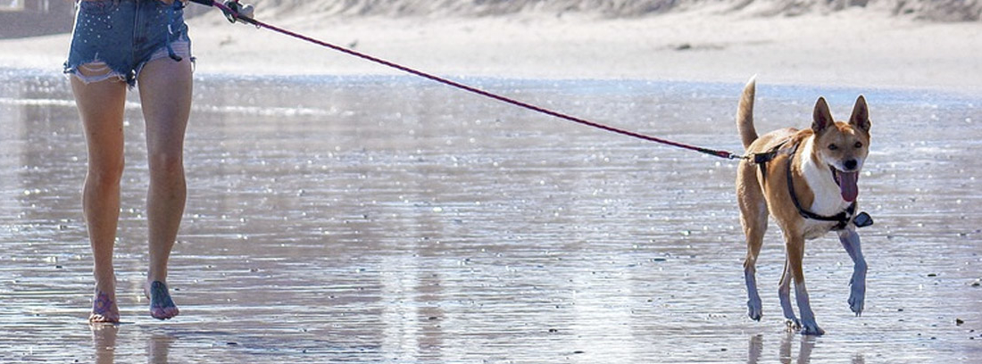 Chica corriendo por la playa con su perro