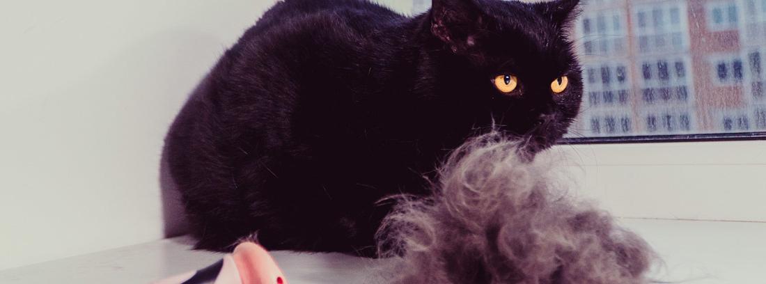 Gato negro con un cepillo y un montón de pelo a su lado