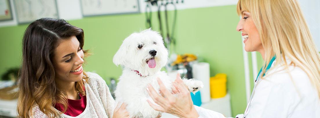 Mujer sujeta perro blanco sobre camilla y junto a veterinaria.