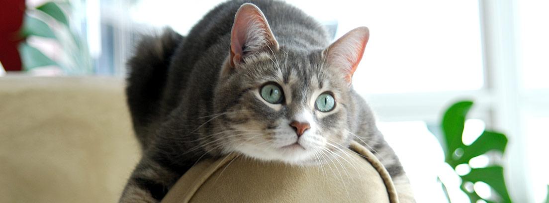 Falta de apetito en los gatos: anorexia felina
