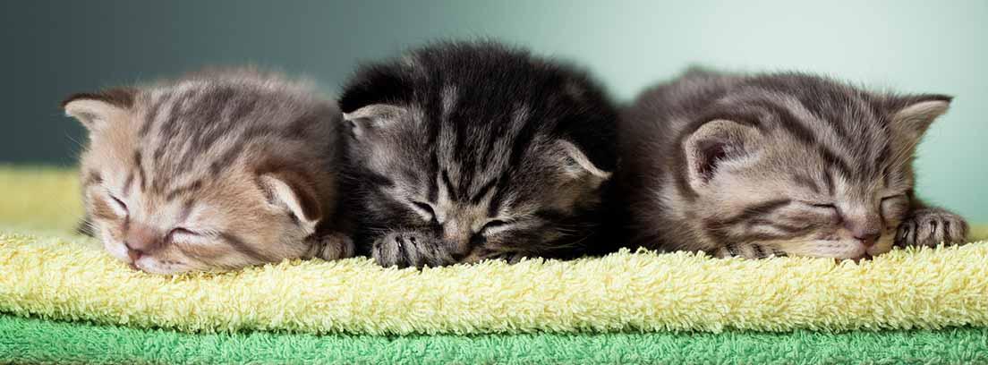 Tres gatitos recién nacidos sobre unas toallas en tonos verdes