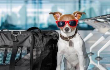 Perro con gafas de sol junto a trasportín en sala de espera aeropuerto