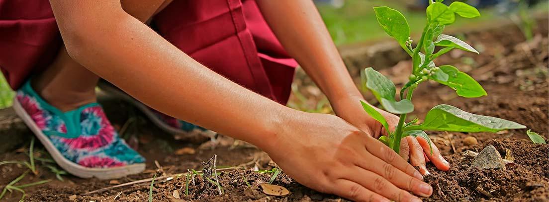 Persona sujetando planta por el tallo sobre tierra de jardín