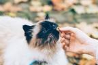 Mano dando comida a un gato blanco.