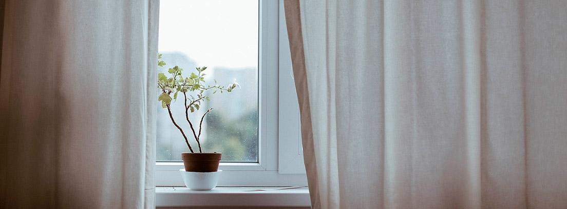 Maceta en el alfeizar de la ventana junto a una cortina blanca