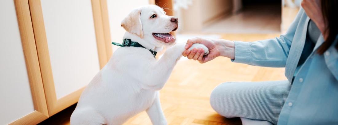 adiestrar cachorro