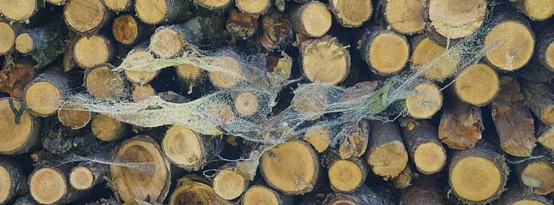 Telaraña sobre unos troncos para leña