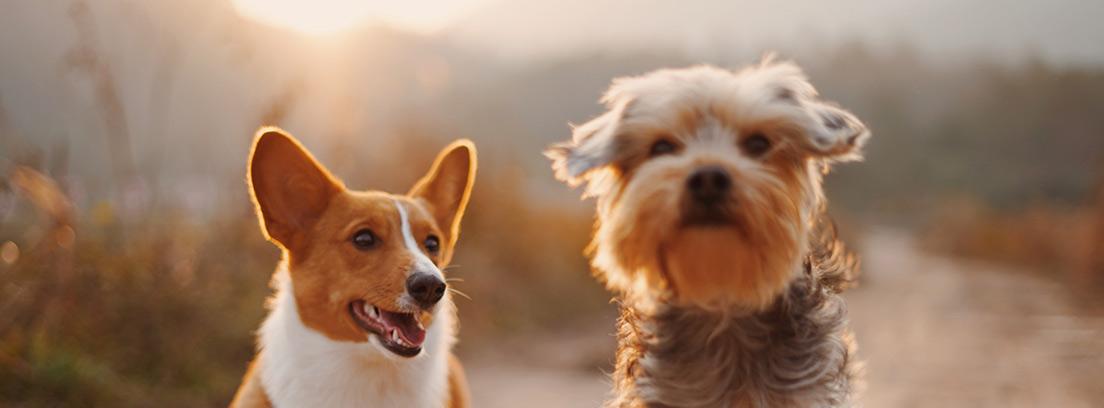 Dos perros corriendo por un camino de tierra