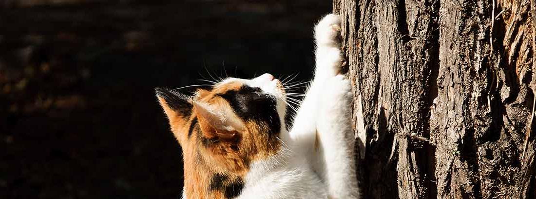 gato arañando sus uñas en un tronco de madera