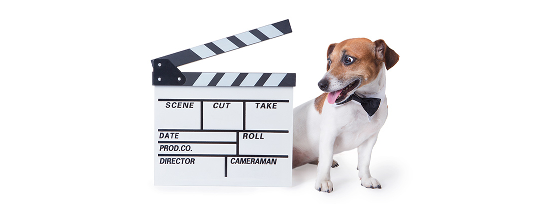 Perro junto a una claqueta de cine