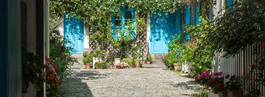 Plantas trepadoras: dónde y cómo ponerlas