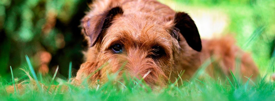 Cómo ahuyentar y evitar que tus perros destrocen el jardín