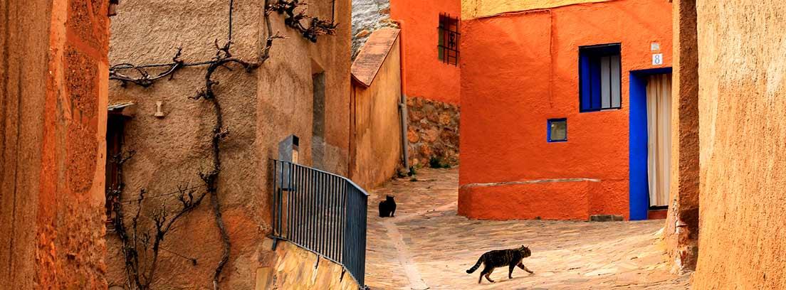 Gato paseando por la calle vacía de un pueblo