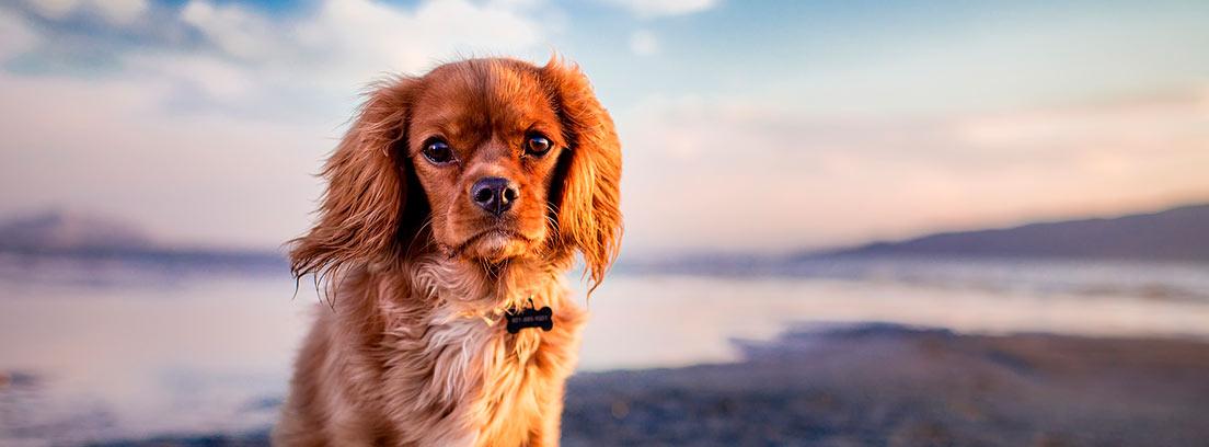 Perro solo en una playa